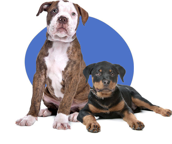 Canispective - Professionelles Hundetraining